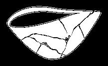 The Care Collective logo bowl